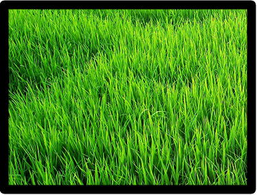 lawn care turf care mowing and maintenance landscape design in